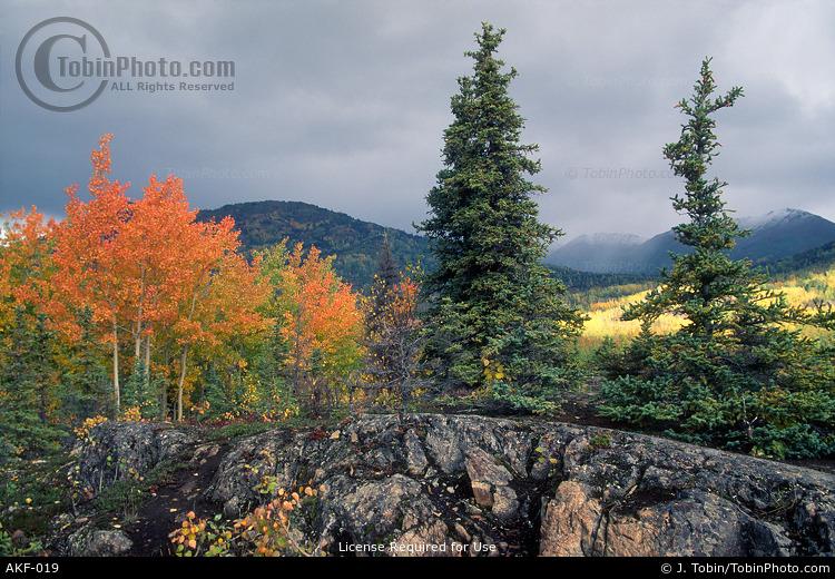 Alaska Autumn Scene