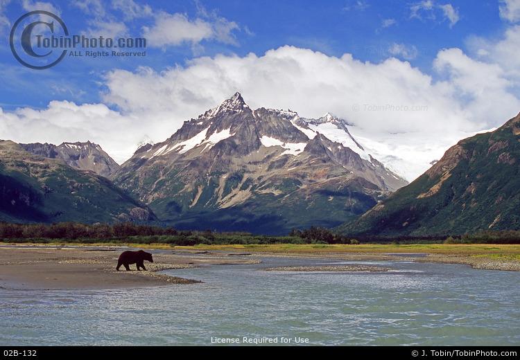 Brown Bear & Mountains