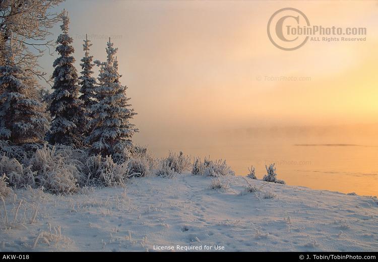 Alaskan Winter Scene