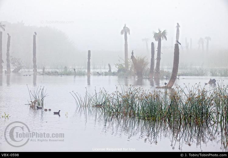 Birds in Florida Wetlands