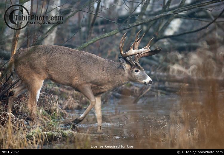 Buck Crossing Creek