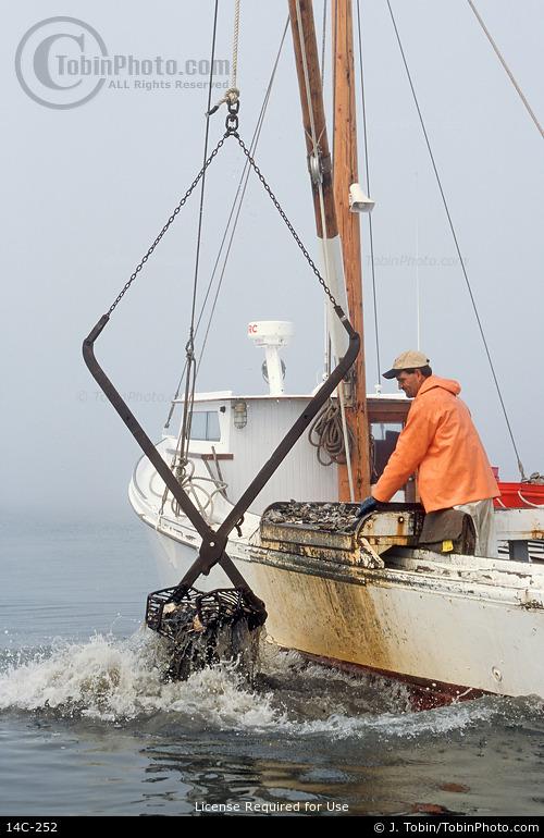 Chesapeake Bay Clamming