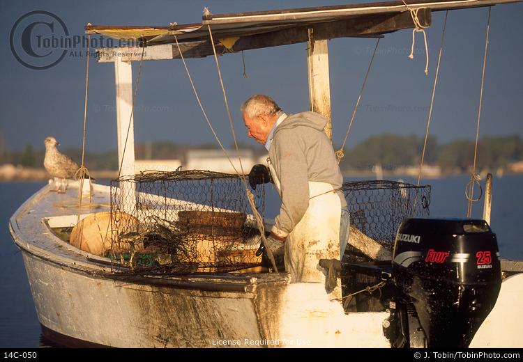 Chesapeake Bay Crabbing