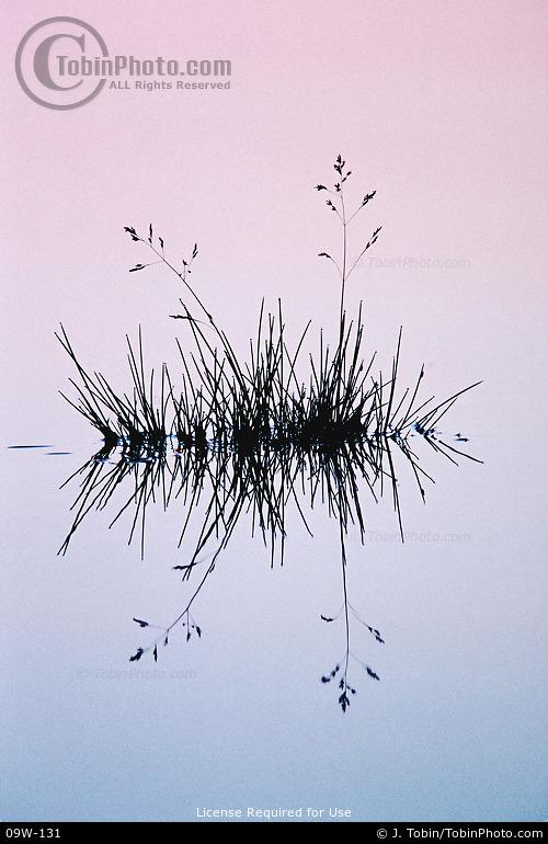 Grass & Alpenglow Reflection