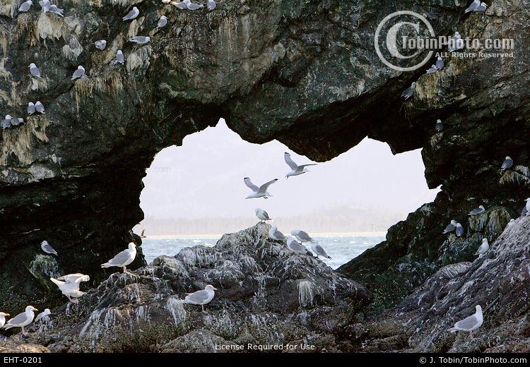 Gull Island