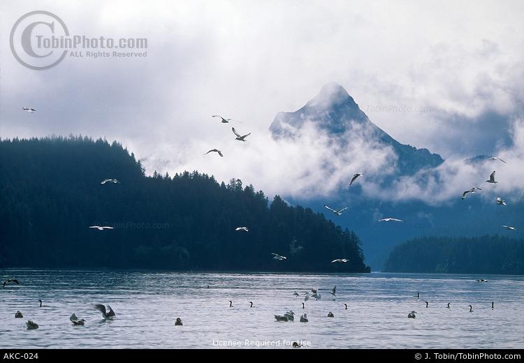 Kachemak Bay & Gulls