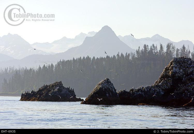 Kachemak Bay Coast