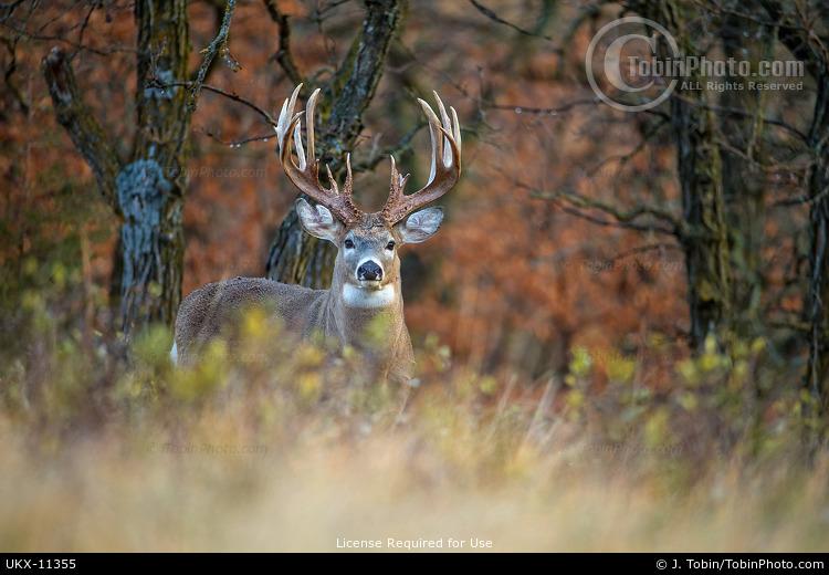 Monster Buck