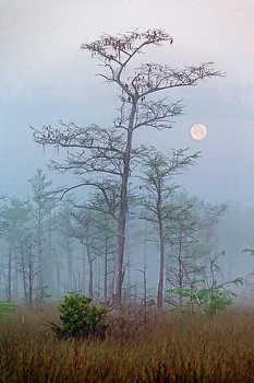 Big Cypress Moon