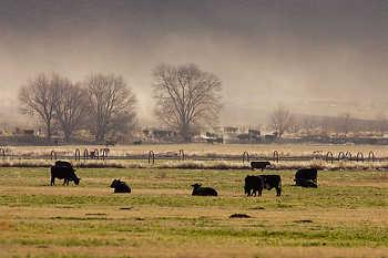 Cattle Ranch Scene