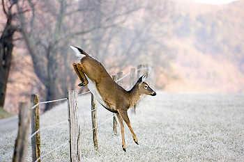 Deer Jumping Fence