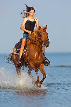 Ocean Horseback Riding